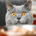 Farligt For Katter Att Ata Banner 120x120