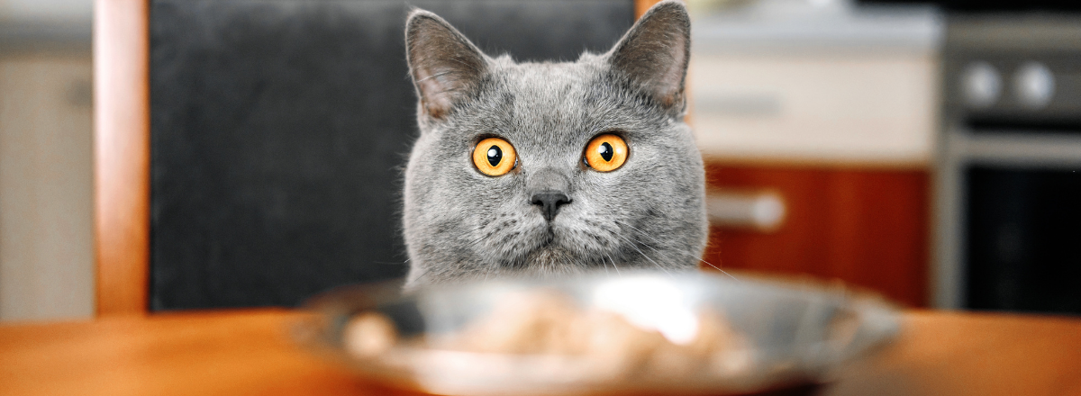 Farligt For Katter Att Ata Banner