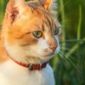 Katt Med Fastinghalsband 120x120
