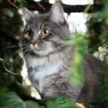 Katt Med Gps Tracker 120x120