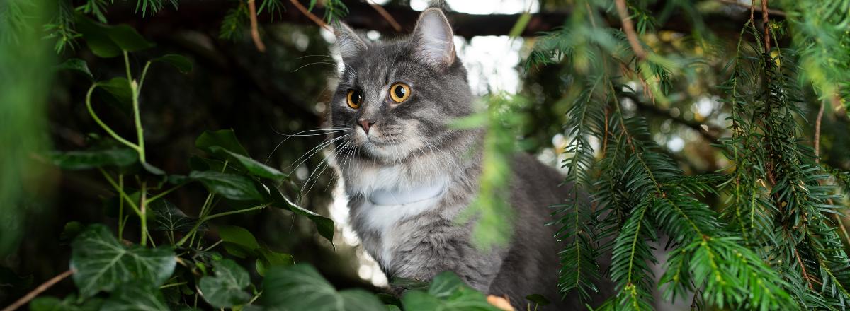 Katt Med Gps Tracker