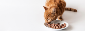 Katt Som Ater Blotmat 300x110