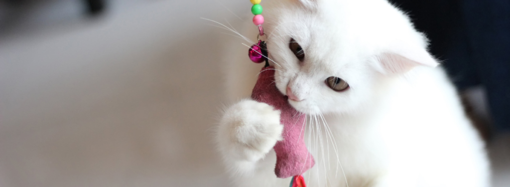 Katt Som Leker 1 1024x375