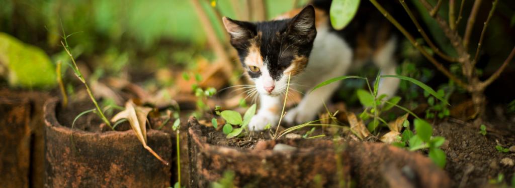 Katt Utforskar 1 1024x375