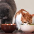 Katter Som Ater Kattmat 120x120