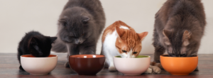 Katter Som Ater Kattmat 300x110