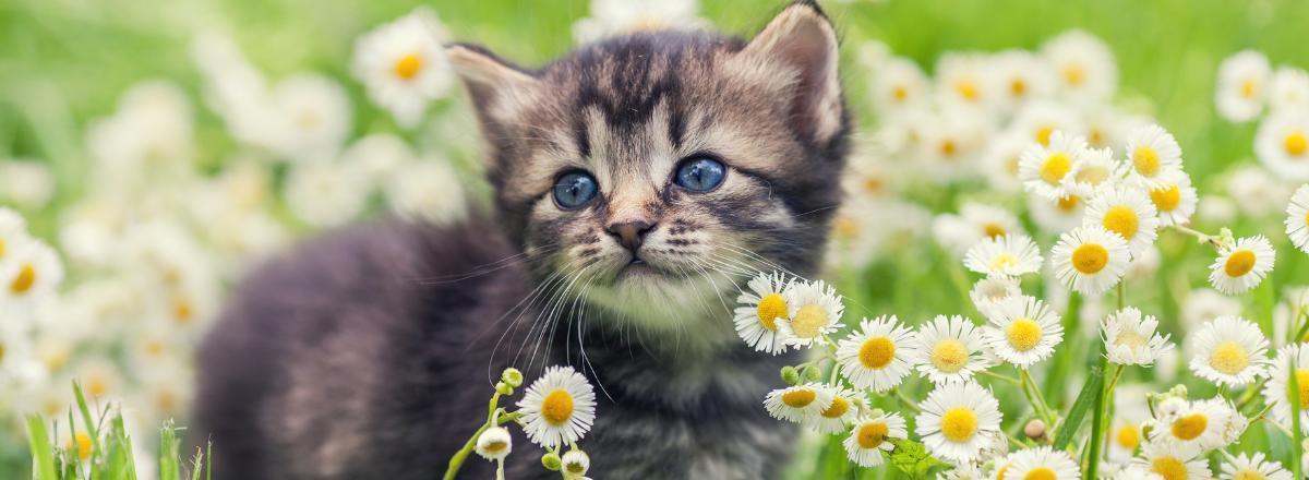 Kattunge Bland Blommor