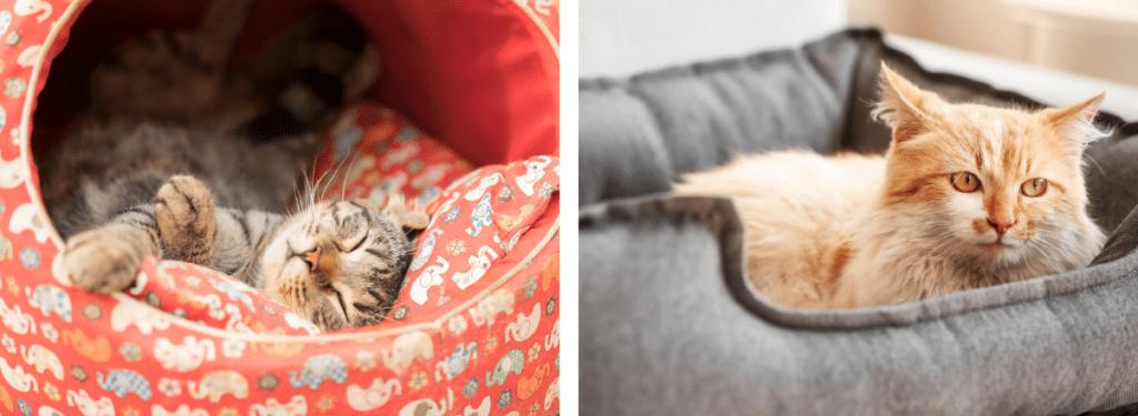 Till vänster i bild ses den klotformade typen av kattbädd som ofta är mest uppskattad av små- och mediumstora katter. Till höger ses den korgformade typen av kattbädd som är bäst för riktigt stora katter.