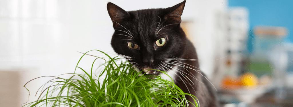 Bästa Kattgräset Katt 1 1024x375