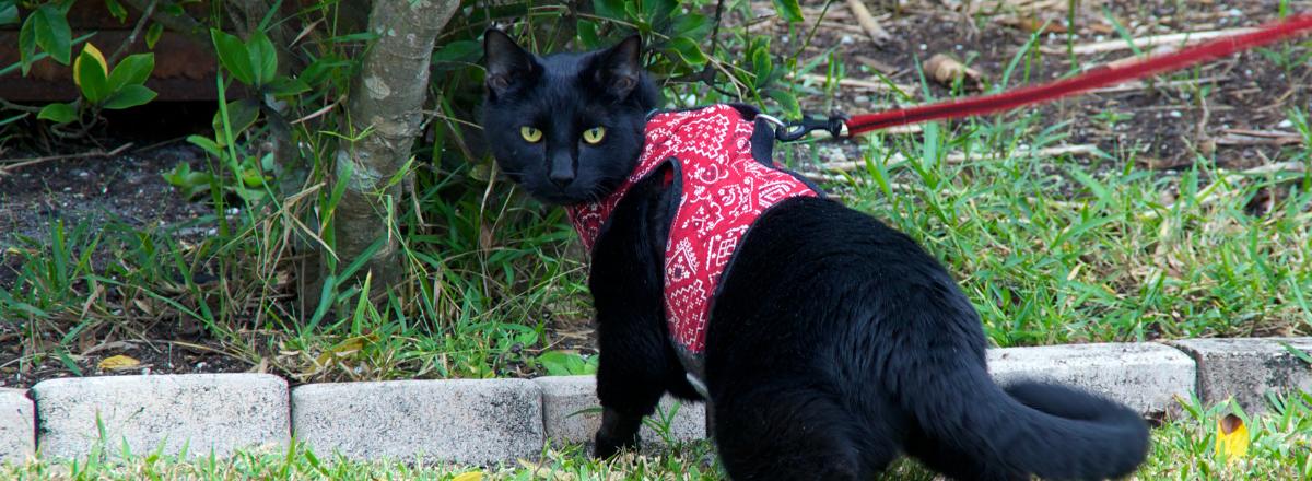 Katt Med Bra Kattkoppel