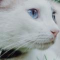 Katt Med Katthalsband 120x120