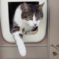 Katt Med Kattlucka Med Chip 120x120