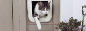 Katt Med Kattlucka Med Chip 300x110