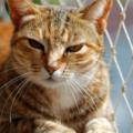 Katt Pa Balkong Med Kattnat 120x120