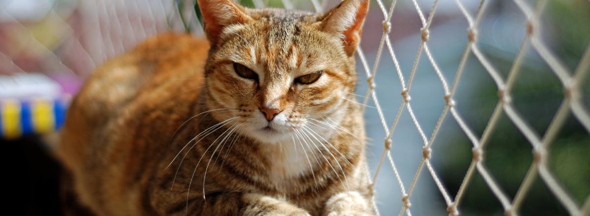 Katt Pa Balkong Med Kattnat
