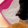 Katter Med Kattsand 120x120