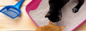 Katter Med Kattsand 300x110