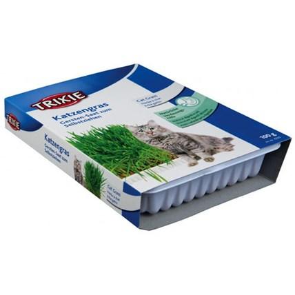Kattgras Med Odlingslada 100 G