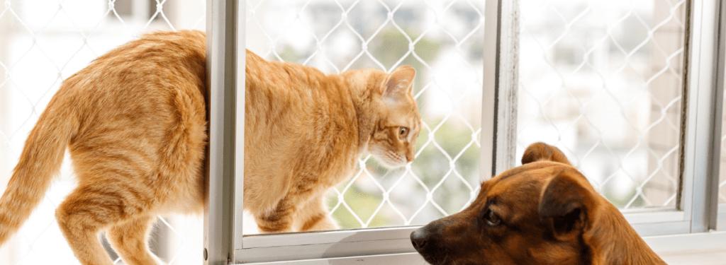 Kattnät Fönster Katt 1024x375