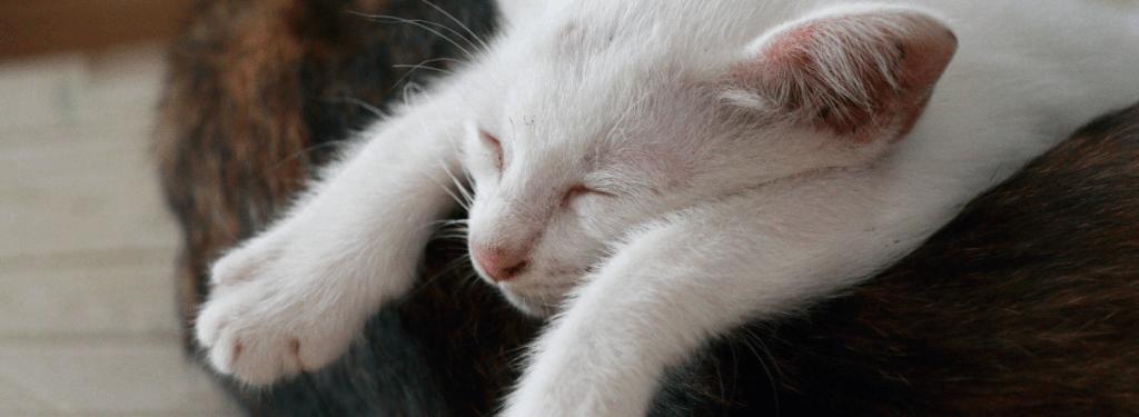 katt i kattbädd