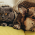 Katt Med Hund 120x120